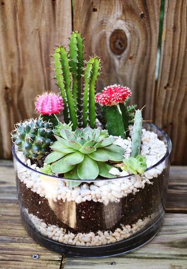 cactus garden design