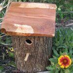 DIY Beautiful Bird House Design