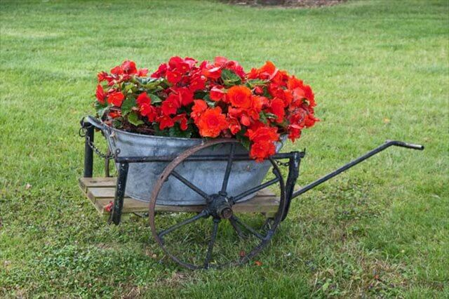 Flower Wheelbarrow Design
