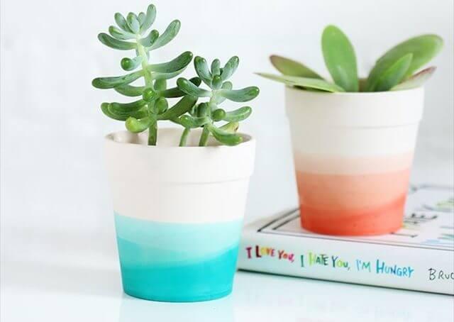 Succulent Pots