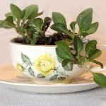 mini garden planter ideas