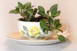 mini garden planter ideas