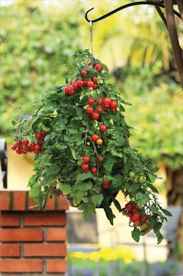 Small Diy Herb Garden