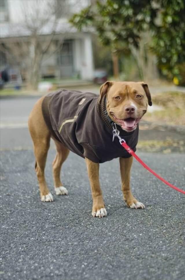 DIY Carhartt Dog Jacket