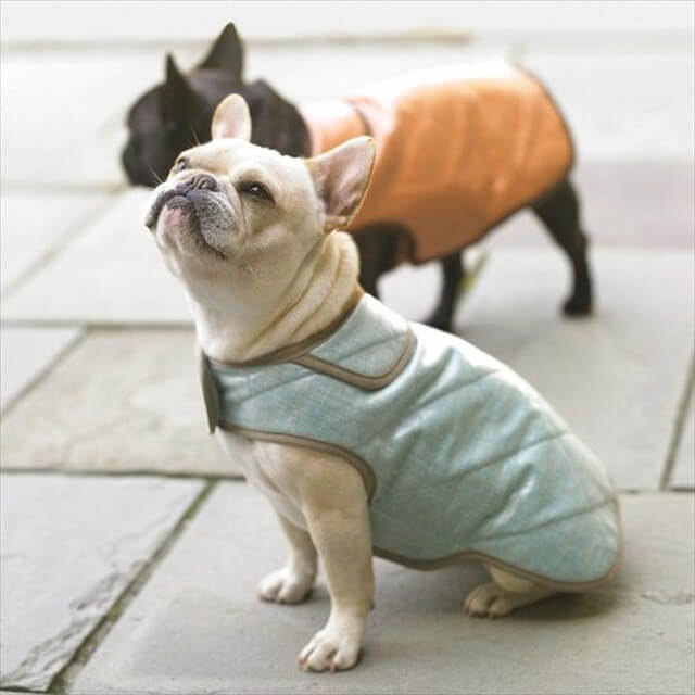 Padded Dog Jacket