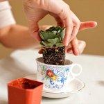 10 Cool DIY Tea Cup Ideas