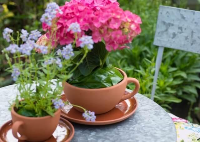 tea-cups-planters