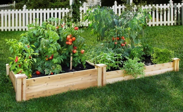 DIY Fruit Raised in Green Garden Designs