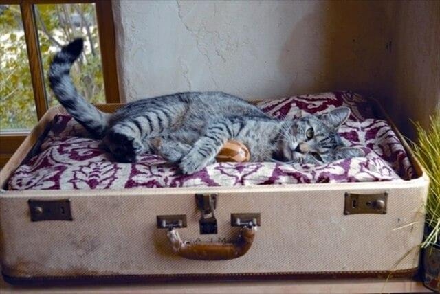 diy suitcase cat bed