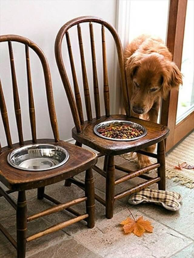 food bowl for dog