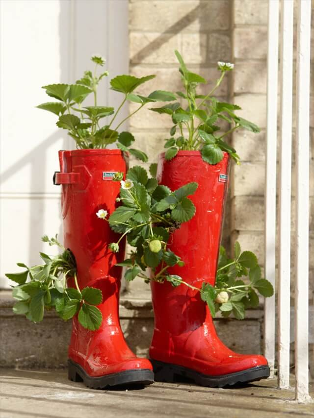 red shoes planter
