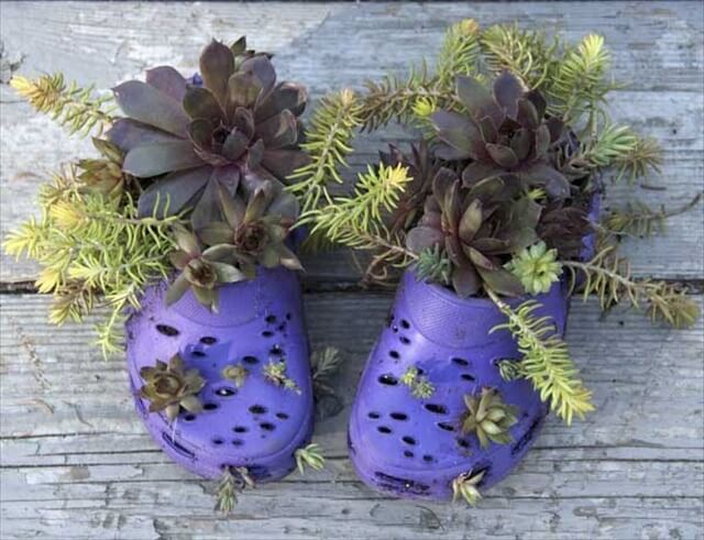 these crocs got cut by the lawn mower or some other equipment, so they were turned into little hanging planters!