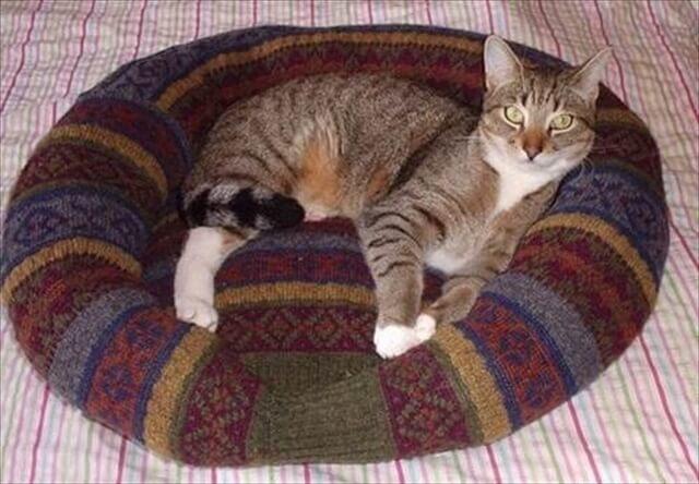 Лежанка из свитера своими руками фото 1000