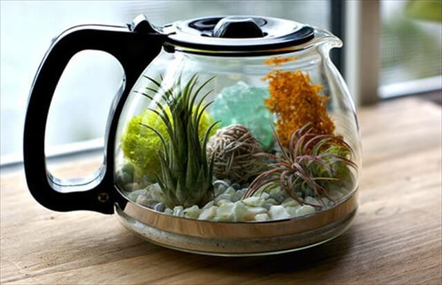 Indoor Teapot Planter
