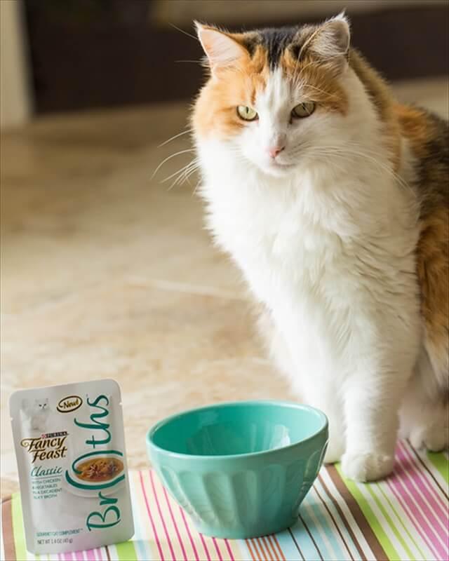 Cat Placemat