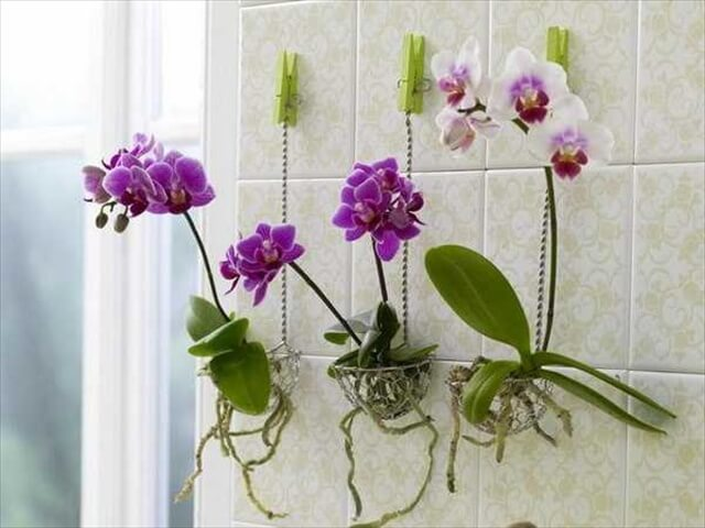 hanging flower vases made with wire and cloth pins