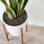 16 DIY Indoor Gardens For Your Home