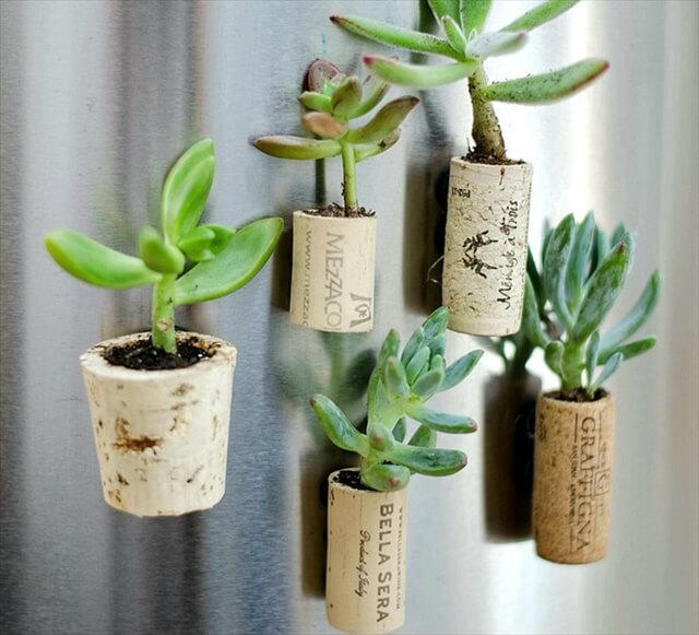Tiny Succulent Planters