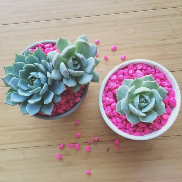Neon Rock Succulent Planter