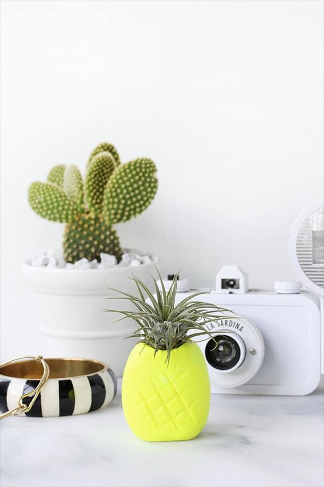 Pineapple Airplant Holder