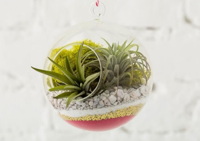 Brit + Co Sand Art Terrarium