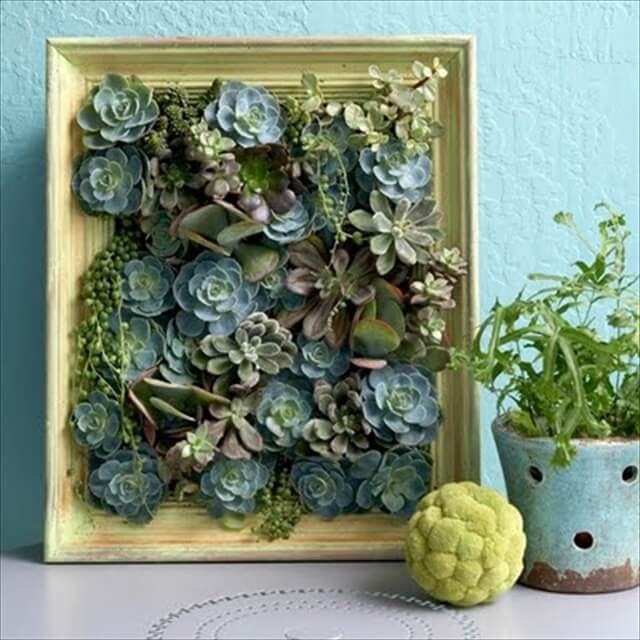 DIY Indoor Succulent Garden Projects