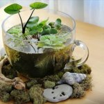 14 DIY Indoor Garden Ideas