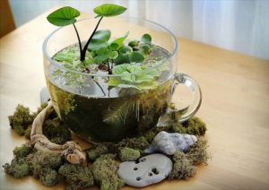 14 DIY Indoor Garden Ideas