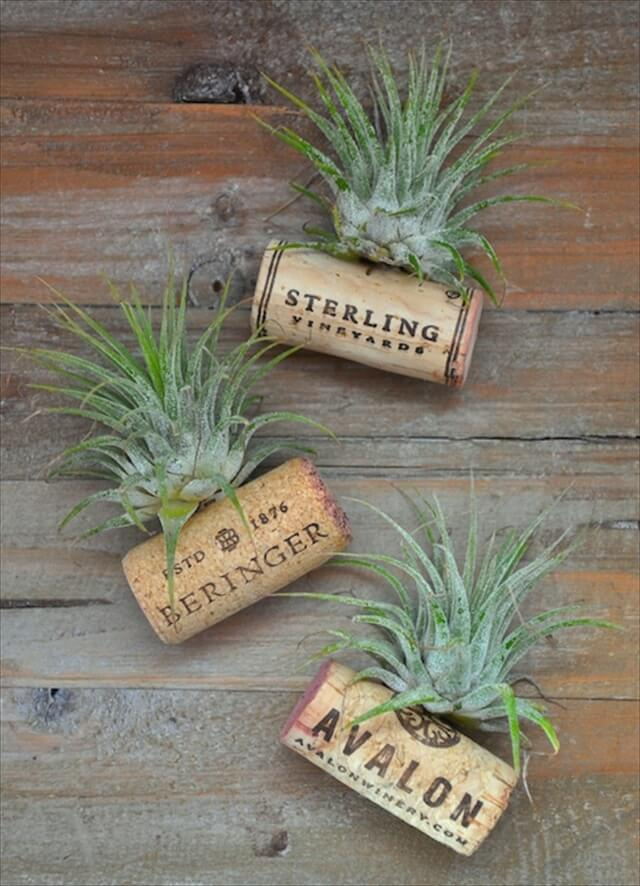 Wine Cork Air Plant Holders