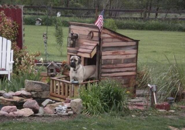 Fantastic diy pallet dog house: