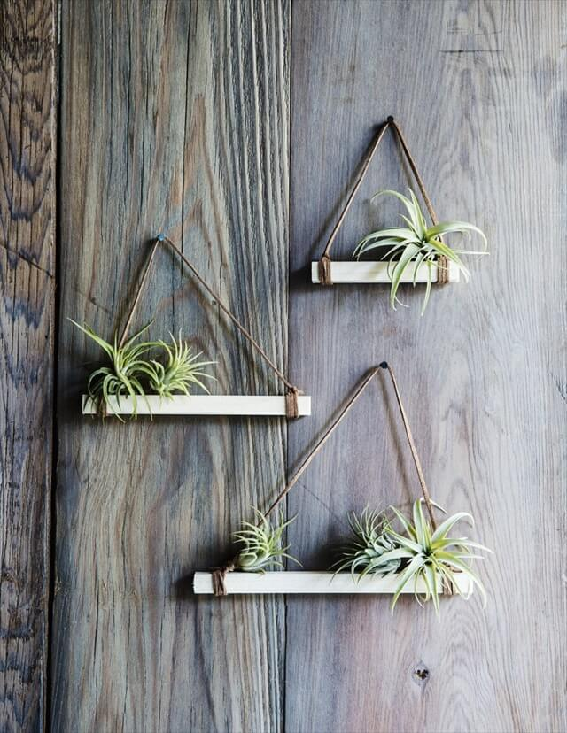 Wall Mounted Air Plant Holders