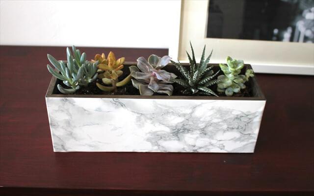 Marble Succulent Plante
