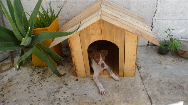 amazing pallet doghouse