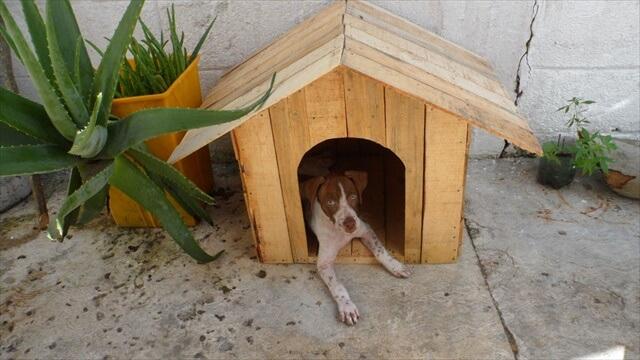amazing pallet doghouse