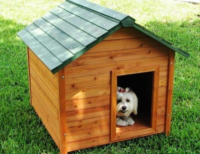 Diy Pallet Dog Crates