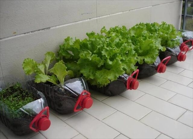 Transparent Plastic Bottle Planters: