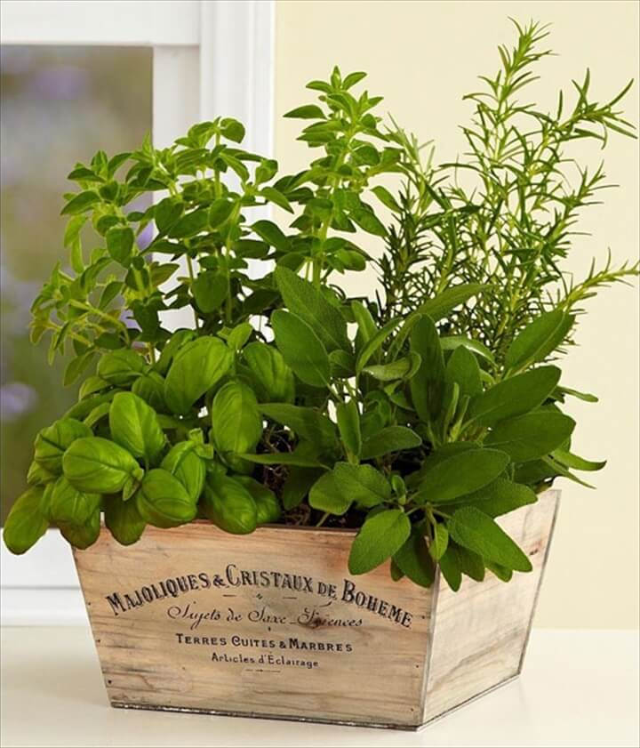 Kitchen Herb Garden Indoor: Herb Gardens To Practice Your Green Thumb With