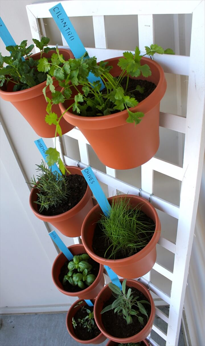 This pallet design can hold every herb you'd want to grow.flower pots with herbs hanging on a vertical trellis