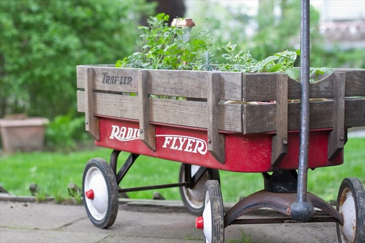 wheelbarrow herb garden