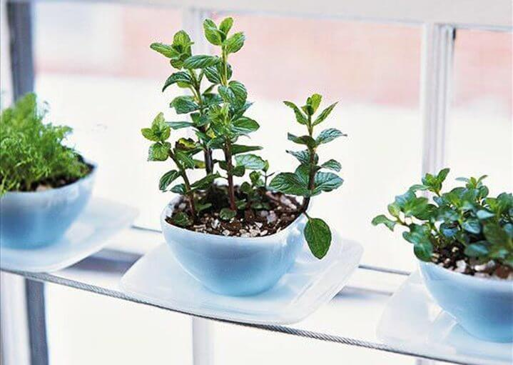 Phenomenal Indoor Herb Gardens