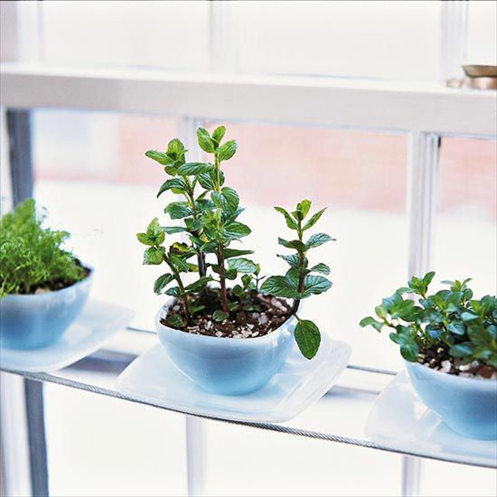Phenomenal Indoor Herb Gardens