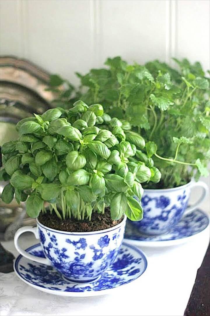 vintage teacup herb planters