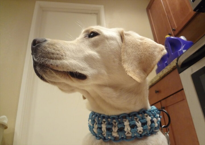 Dog with paracord unique collar