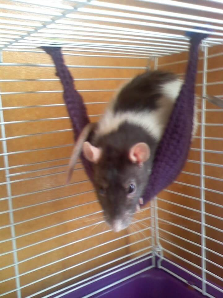 Rat hammocks patterns