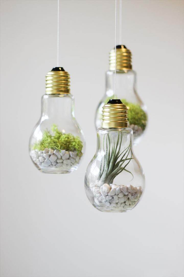 DIY Lightbulb Terrariums
