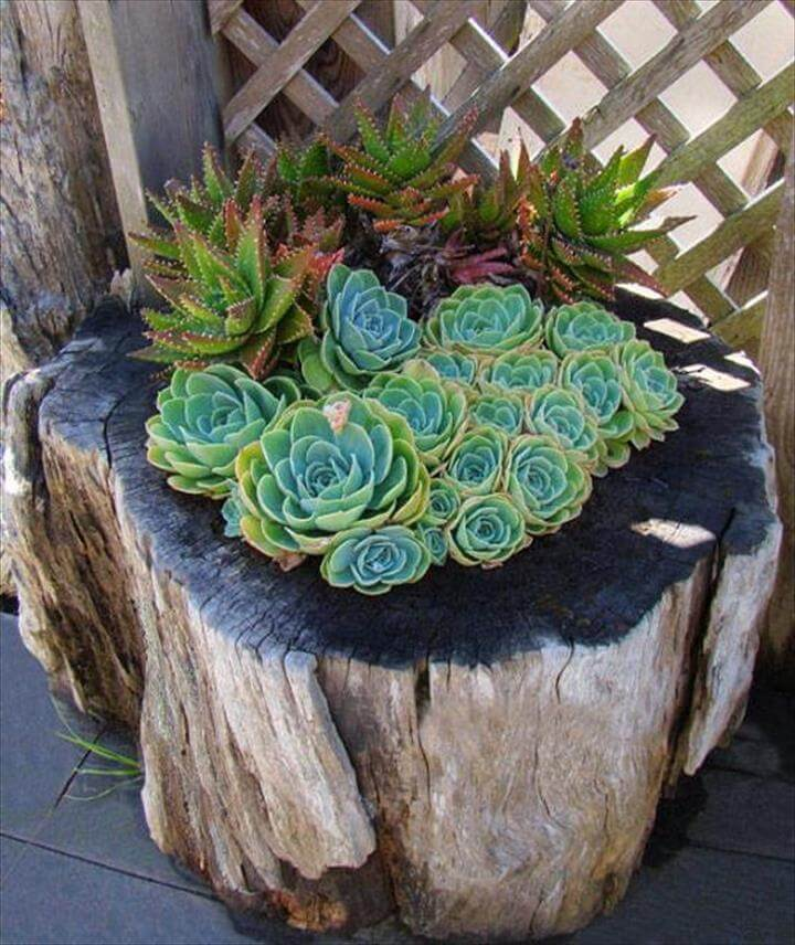 Succulents Tree Stump