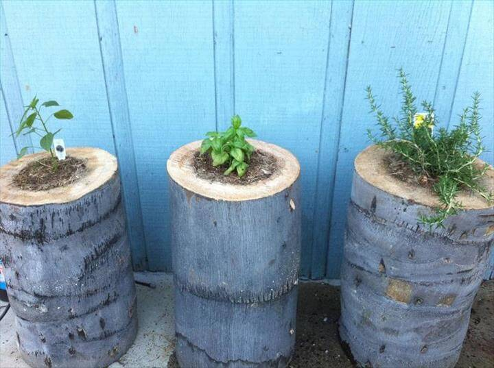 Another Stump Planter