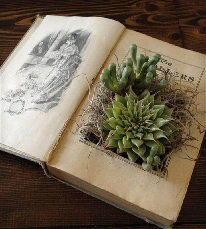 nestle your delicate succulents in an old book