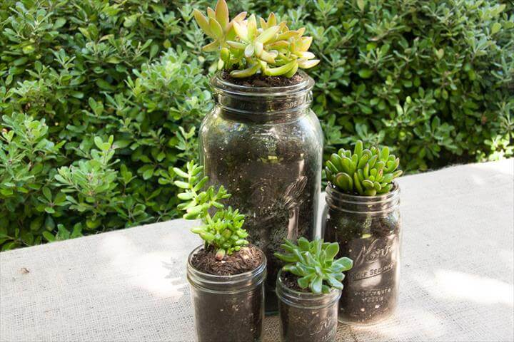 Mason Jar Succulents. succulentmain