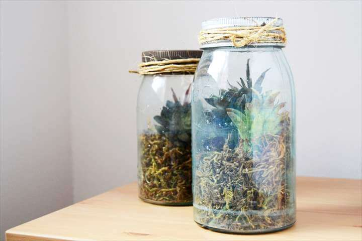 DIY terrarium using a vintage mason jar and succulents.